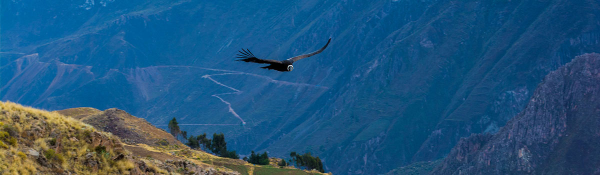Colca canyon tours