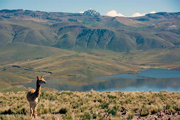 best colca canyon tour from puno