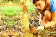 tambopata national reserve tour